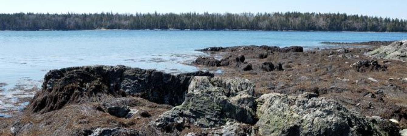 Island of Islesboro - View off shore with forest on far off bank