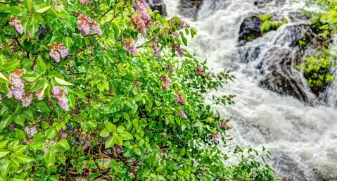 Flowers and waterfall in Camden, Maine.