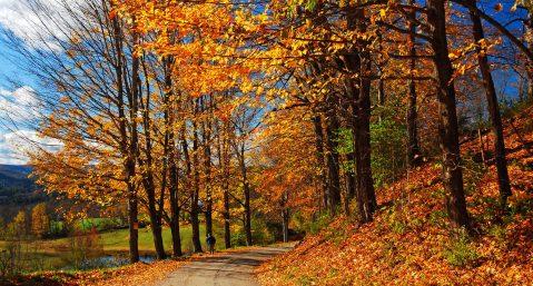 View of fall foliage near a small lake.